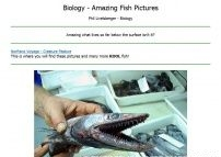 Amazing Fish pictures