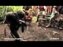 Crazy African guy giving AK-47 to monkey