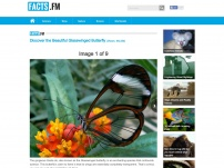 Discover the Beautiful Glasswinged Butterfly