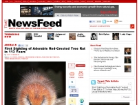 First Sighting of Adorable Red-Crested Tree Rat in 113 Years